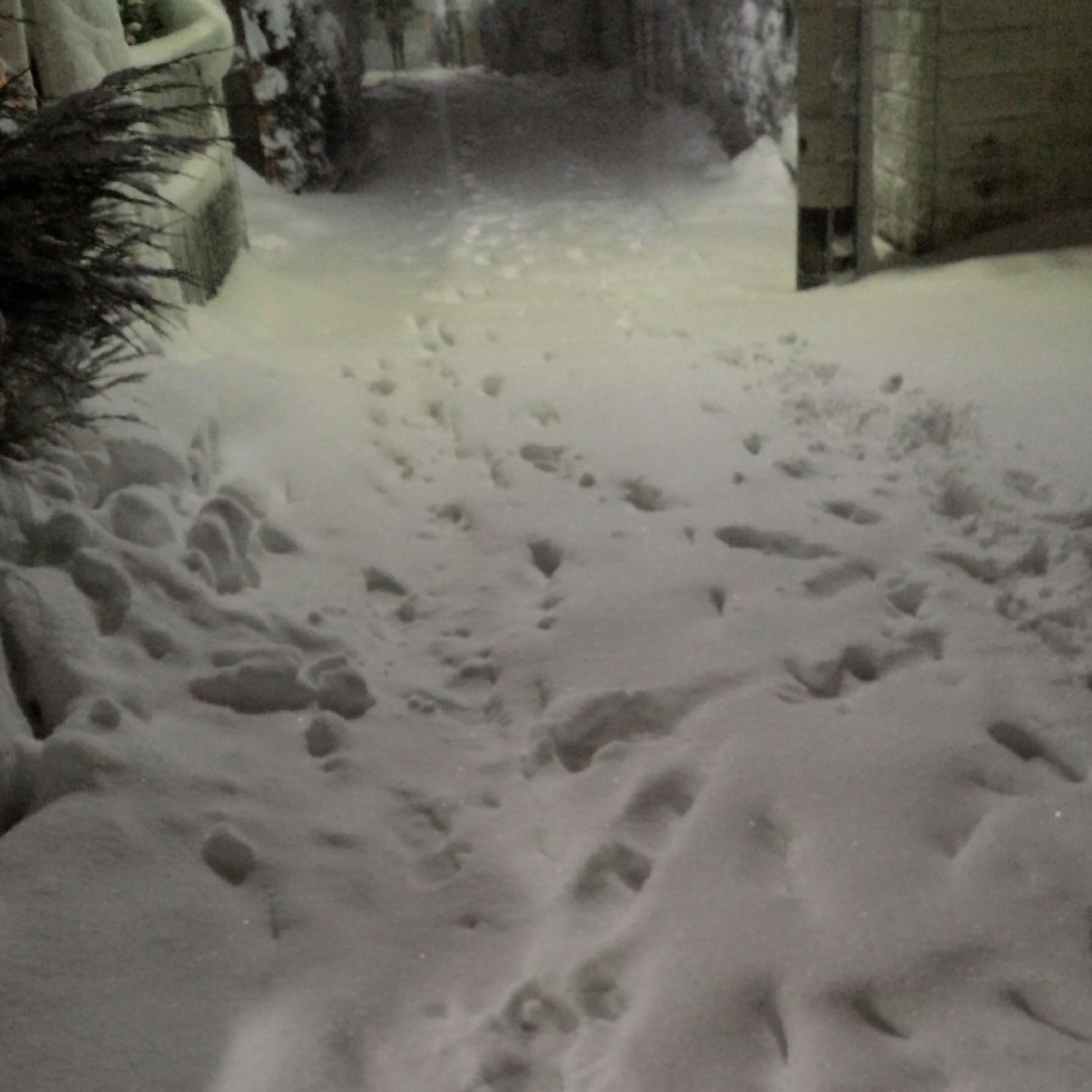 45年ぶりの大雪
